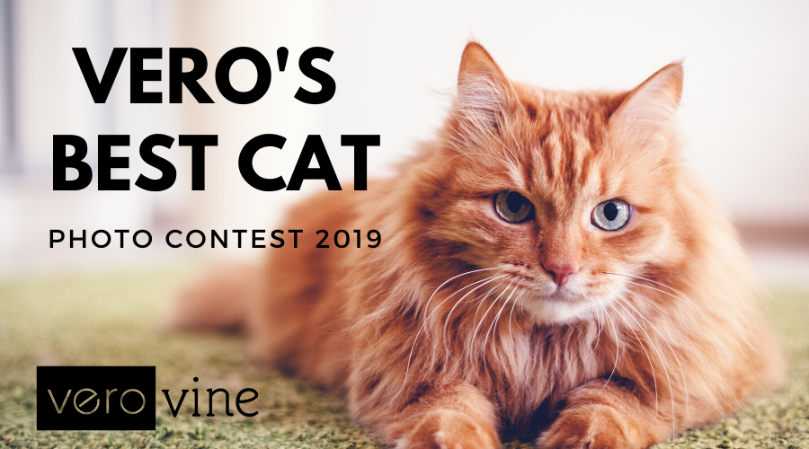 Best Cat Photo Contest